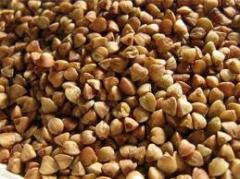 Buckwheat wholesale (sale)