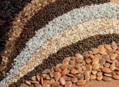 Cereals food seeds