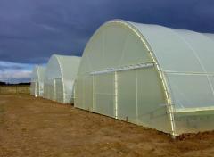 "Farm greenhouses ""lucrative"