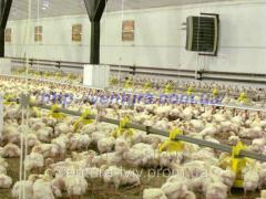 For poultry complexes equipment (poultry farms)