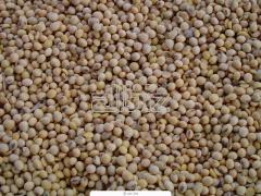 Соя. Сою продам в Украине. Зерновые, бобовые и