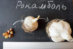 Seeds of garlic