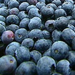 He bilberry, fruits (frozen)