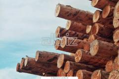 Logs are pine