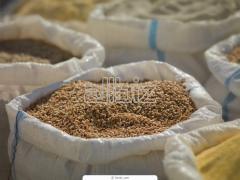 Пшеница первого класса
