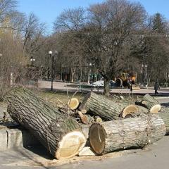 Спил деревьев Киев. Удаление аварийных деревьев