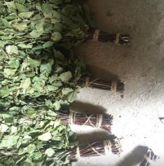 Дубовый банный веник 55 -60 см