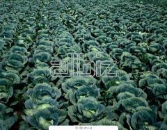 Средства защиты растений от болезней. Минеральные