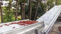Конвейеры ленточные для сортировки ягод,  а...