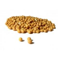 Mustard sunflower seeds