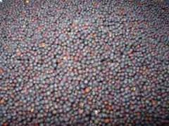 Продукция сельскохозяйственная семена рапса