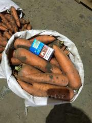 Морковь (carrot)