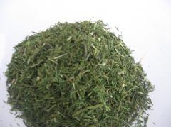 Fennel dried