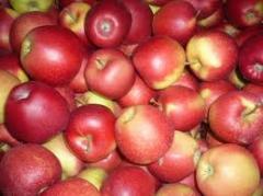 Florin apples for expor