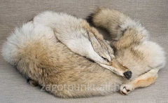 Natural fur of wolf