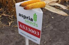 Кукуруза Асприя Сидз- высокая устойчивость к