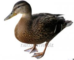 Sagination for ducks (granule) of 100%