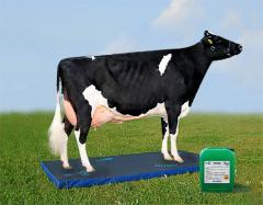 Ветеринарные  коврики  для дезинфекции - подошвы