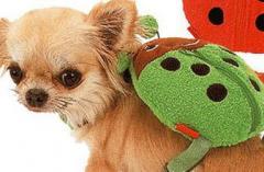 Шлейки - рюкзачки  для маленьких собачек и котов!