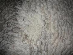 Wool sheep, Raw materials of an animal origin for