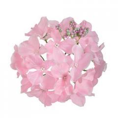 Головки гортензии искусственные розовые...