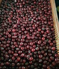 Cherries frozen