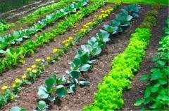 Средство защиты растений от сорняков