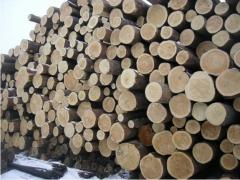 Forest products. Sawlog F 20-24.