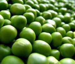 Peas of 2016