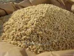 Сырая дробина рационные корма для коров телят