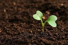 Земля для сада, огорода 2800 грн/Зил с доставкой
