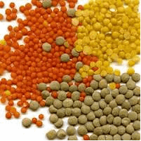 Grain lentil - Lentil food