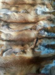 Выделанные  шкурки лисы