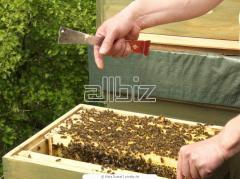 Рамы для пчел