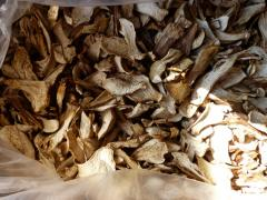 Dried cepes of 2017 r