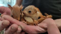 Little squirrels