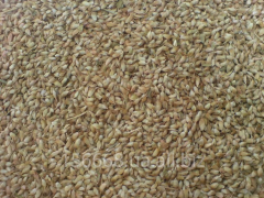 Utskho of a Sunela seasoning (FENUGREEK BLUE)