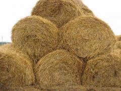 Straw (barley).