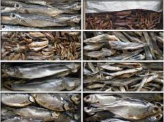 Fish. Weight dried seafood.