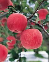 Apples autumn sale wholesale