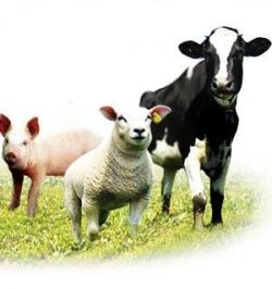Кормовые добавки, добавки пищевые для животных