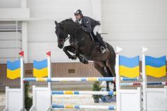 Конь мерин Stels Ганноверская порода