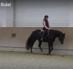 Конь мерин Bulat Ганноверская порода