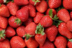 Strawberry, Deep Frozen (IQF), class B, uncalibrated
