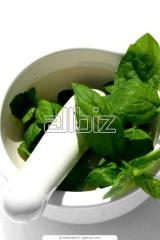 Mint leaves dried. Min