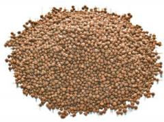 Vetch seeds