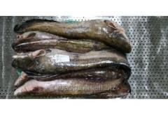 Речная рыба -  сом 10-20 кг (мороженный )