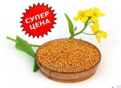 Semyon Gorchits yellow sowing campaign one-year /