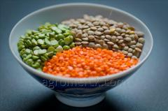 Lentils green red brown in bulk and pack 50 kg PP