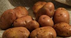 Картофель семенной, купить картофель, Серпанок